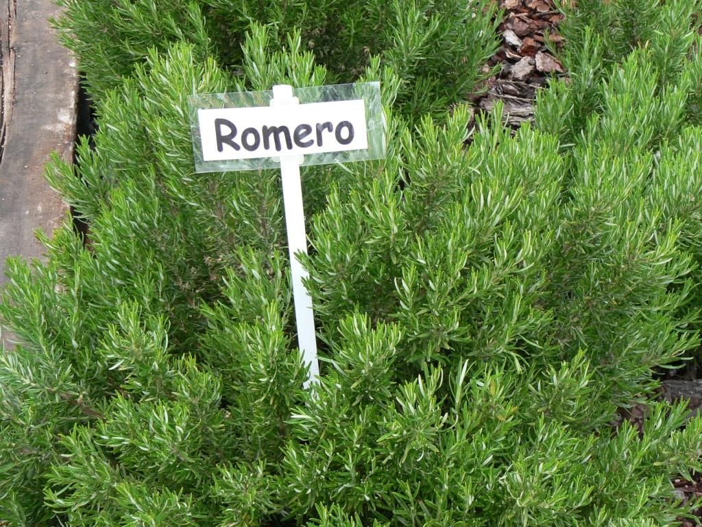 Baños Plantas Medicinales:La Planta De Romero