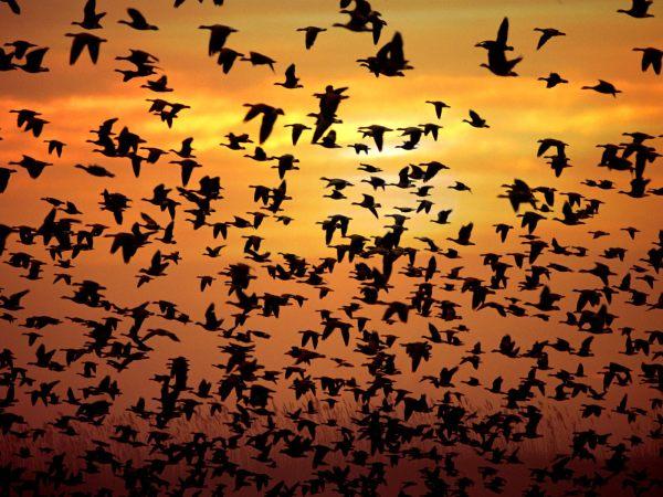 La celtas pensaban que las aves eran la la reencarnacion de las almas de los muertos