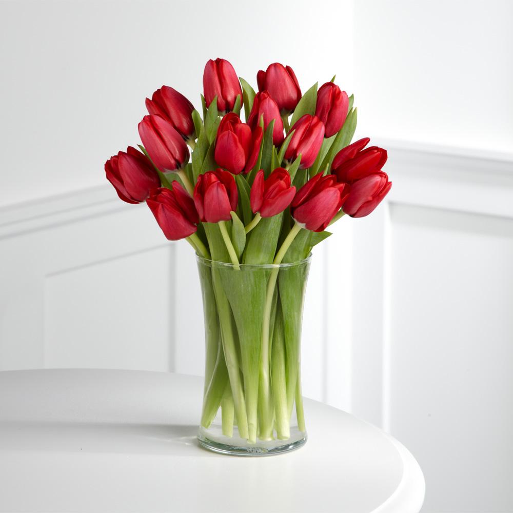 Картинки красивые тюльпаны 35 фото  Прикольные картинки