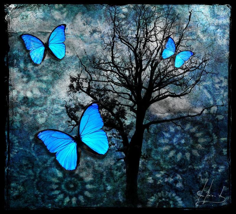 Significado De Los Colores De Las Mariposas Mensajes De Las