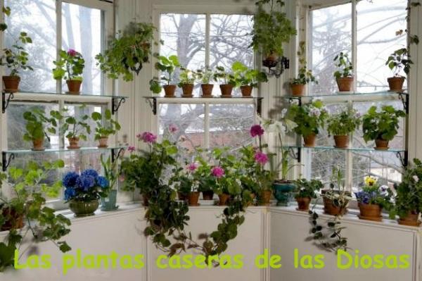 un-jardin-ventana-L-kfFygN copia