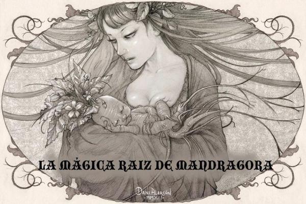 En la Magia Celta la Mandrágora esta considerada una de las plantas mas prodigiosas