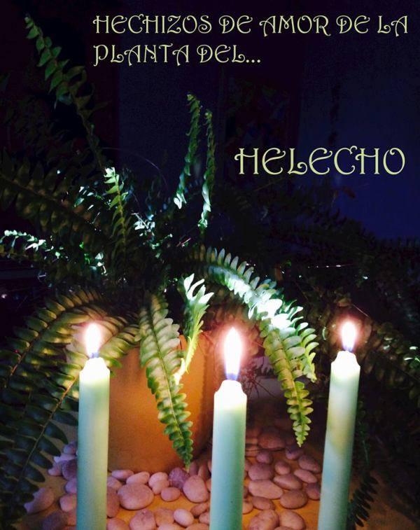 Planta del Helecho