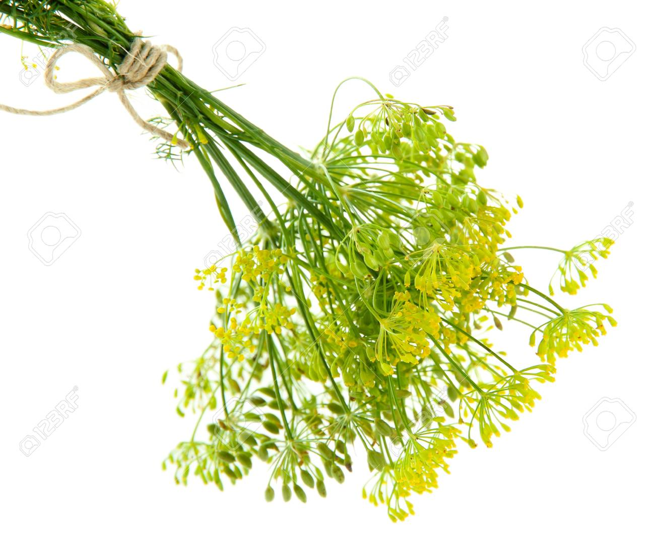 21364444-fresh-dill-flowers-isolated-on-white